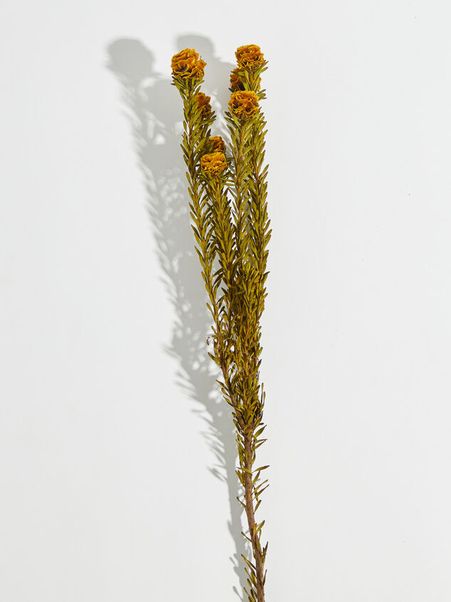 Dried Tortum Flowers Detail 3 - Altar'd State