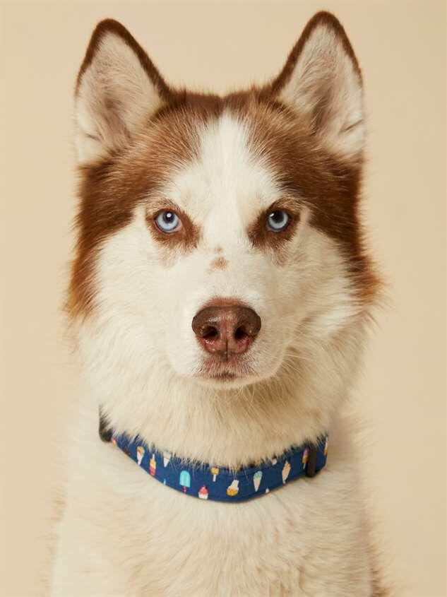 Bear & Ollie's Ice Cream Dog Collar - Large Detail 2 - Altar'd State