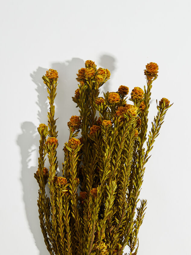 Dried Tortum Flowers Detail 2 - Altar'd State