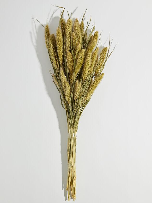 Dried Seteria Florals - Altar'd State