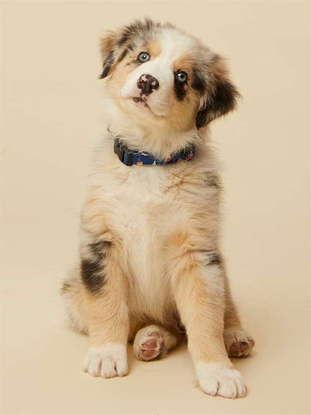 Bear & Ollie's Ice Cream Dog Collar - Small - Altar'd State