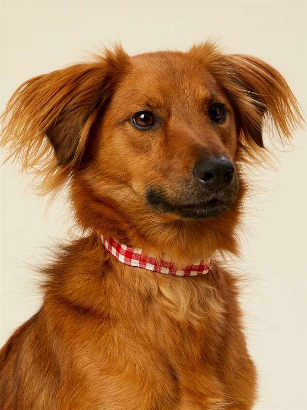 Bear & Ollie's Red Gingham Dog Collar - Small Detail 2 - Altar'd State