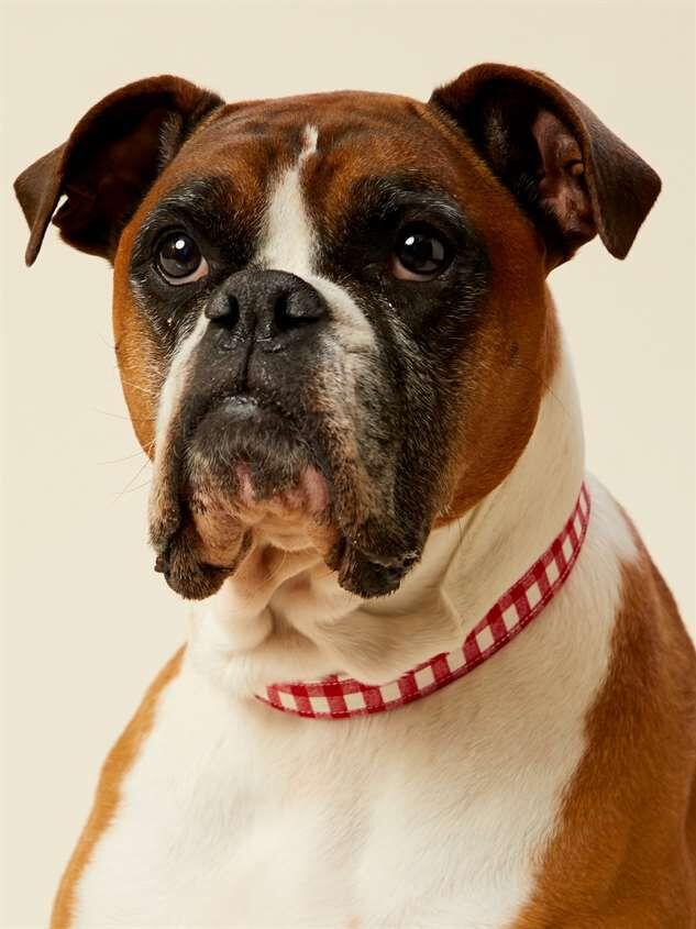 Bear & Ollie's Red Gingham Dog Collar - Medium Detail 2 - Altar'd State