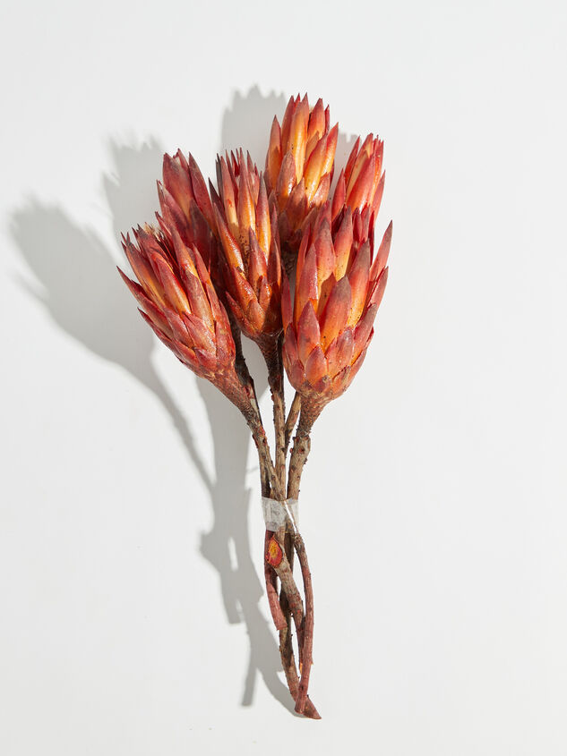 Dried Repens Flowers - Altar'd State
