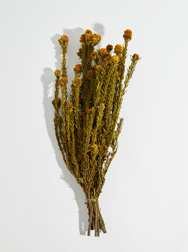 Dried Tortum Flowers - Altar'd State