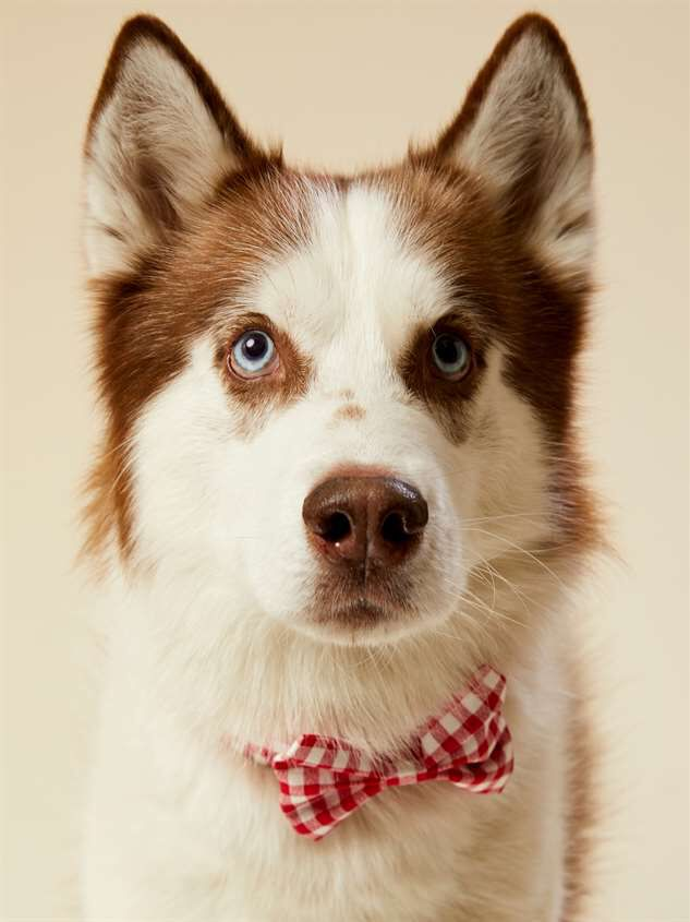 Bear & Ollie's Red Gingham Dog Collar Bow Tie Detail 2 - Altar'd State